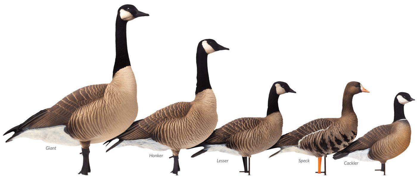 Goose Decoys For Sale >> Goose Decoys Dave Smith Decoys