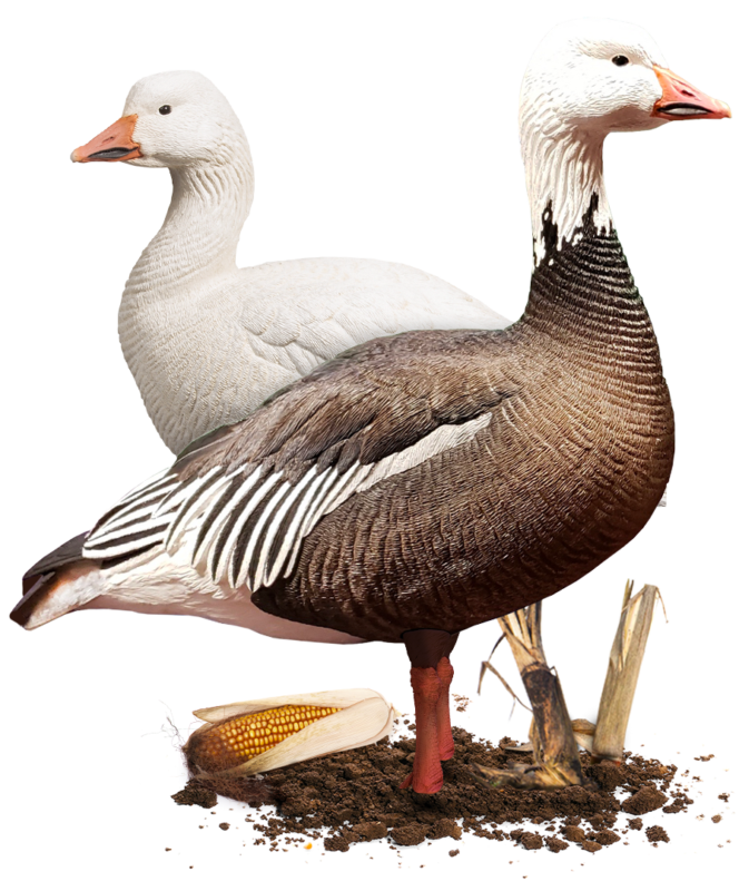 Snow & Blue Geese – Dave Smith Decoys